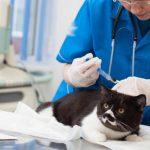 猫の癌の進行速度は速い?早期発見するためのセルフチェックを紹介