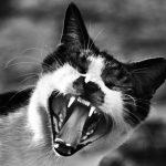 猫に噛まれた時に病院へ行くタイミング!放置したらどうなるの?