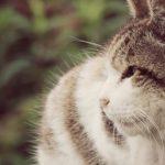 猫の認知症は予防できる?進行を遅らせる対処法3つを紹介