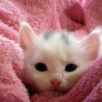 猫のドライフードはいつから?離乳の進め方も紹介