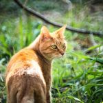猫のフィラリア症の症状とは?原因についても