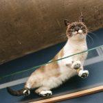 猫のフィラリア症は予防できる?気をつけたい5つの注意点とは