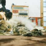 猫の避妊手術後には術後服!エリザベスカラーとの違いは?