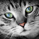 猫が口呼吸するのは鼻づまりが原因?試したい5つの対処法を紹介