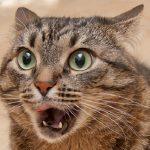 猫のストレスを発散!効果的な5つの解消方法とは?