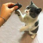 猫への芸の教え方!ストレスなく仕込む3つの方法を伝授