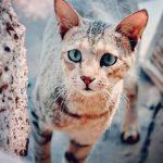 猫の目から膿が出ているのは病気?原因と3つの対処法を紹介