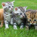 猫のお尻から白い虫が!条虫症の原因と予防法を紹介