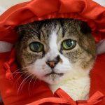 猫の平均寿命は?雑種の方が長生きするって本当?