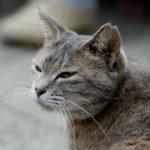 猫の10歳は人間に例えると56歳!老化に伴う変化や病気を紹介