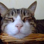 猫の睡眠時間は平均どれくらい?人間の2倍って本当