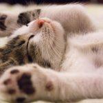 猫の寝相が悪いのは病気?変な寝方をしているときの対処法を紹介