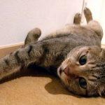 猫の声が出ないのはストレス?原因や病気の可能性について解説