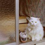猫の流動食の与え方のコツ5つ!手作りレシピについても紹介