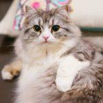 猫のフロントラインの効果!使用方法と気になる副作用も紹介