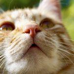 猫の鼻炎は自然治癒できる?治療法と効果的な3つの予防法を解説