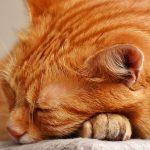 猫が老化で痩せる!理由と食欲を増進させる3つの方法を紹介