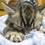 猫が毛布をもみもみする理由は?その時の気持ちについても