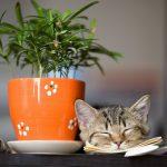 猫の毒になる観葉植物7種!誤飲を防ぐ対処法も紹介