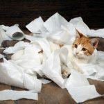 猫がティッシュを食べる!止めさせる効果的な3つの対処法