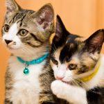 猫の分離不安症には多頭飼いが有効?注意点や慣れさせるコツを紹介