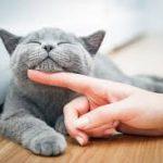 ビオフェルミンは腎不全の猫に効果あり?飲ませ方や注意点を紹介