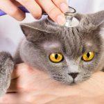猫を動物病院に初めて連れて行く時に気をつけたい5つの注意点とは?