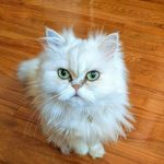 猫の皮膚病で体が臭くなる!放っておくと危険な理由とは?