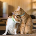 2匹目の猫の迎え方!先住猫と仲良くするための5つのポイントを紹介