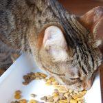 お試しができる猫のプレミアムフード5選!選び方のコツも紹介