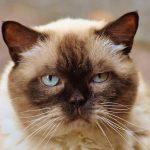 猫のサマーカットの料金はいくら?メリット・デメリットについても