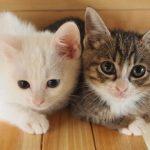 猫の皮膚病の疥癬はダニが原因!かかりやすい時期についても紹介