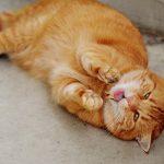猫のげっぷが臭いのは病気?原因と効果的な3つの対処法を紹介