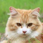 猫が吐くことが何度もあるのは危険!考えられる3つの原因とは?