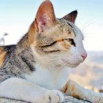 猫が吐くのはストレスが原因?考えられる3つの理由を解説!
