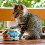 猫の吐く頻度が多いと危険?気になる脱水症状について解説