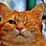 猫の変わった名前ランキング!オス・メスなど種別に紹介