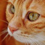 猫がご飯食べない!元気がない時は餌を切り替えるべき?