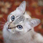 猫の皮膚病の種類!早期発見に役立つ5つの症状とは?