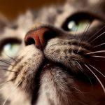 猫は幽霊を追い払う?災いを払い幸せを招く猫の特徴も紹介