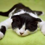 エアコン嫌いの猫の熱中症対策5つ!効果的なグッズで夏を乗り切る