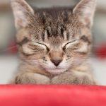 猫が吐く白い泡の正体とは?ぐったりしていたら危険な状態なの?