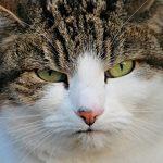 猫の床の傷を防止する方法とは?効果的な4つの方法を紹介!