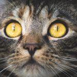 猫アレルギーでくしゃみが止まらない!鼻水も出たら原因はハウスダスト?