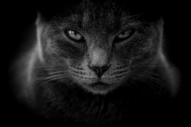 猫の嘔吐、黄色い液体を吐いたときは、要注意!! …