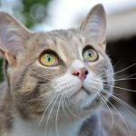 猫が頭突きしてくるのは愛情表現?3つの理由と絆を深める対処法