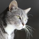 猫が吐く黄色い液体は胆汁?症状の見分け方と可能性のある病気とは?