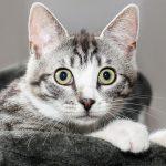 猫が胃液を吐く!透明な場合の判断基準とは?様子見でいいの?