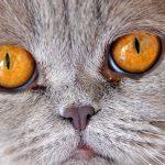 猫が吐く原因とは!病気の可能性もあるってホント!?