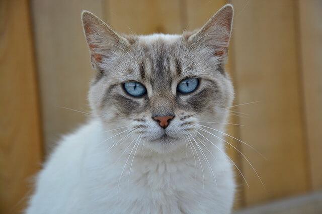 猫の嘔吐が黄色の対処法。危険な病気の原因と治療法
